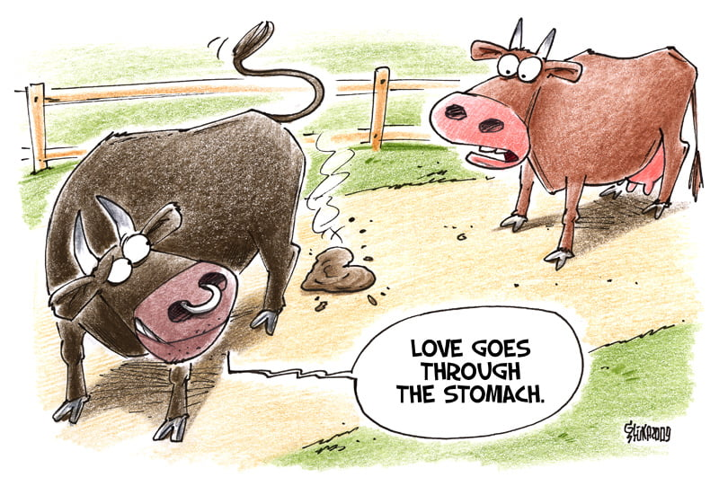 Love cartoon, Gatis Sluka, cow, bull